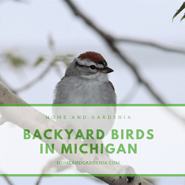 40 BEAUTIFUL BACKYARD BIRDS IN MICHIGAN WITH PICTURES ...